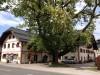 Betriebsobjekt / Halle / Lager / Werkstatt - 5082 Grödig - Salzburg Umgebung - 66.50 m² - Provisionsfrei