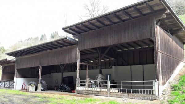Betriebsobjekt / Halle / Lager / Werkstatt - 9554 St.Urban - 242482